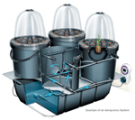 Example of an Aeroponics System
