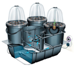 Example of an Automated Hydroponic Propagation System