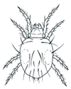 Example of a Red Spider Mite