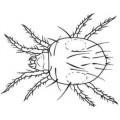 Predator Bugs N/A