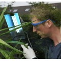 CleanLight Safety Glasses N/A