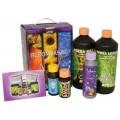 Bloombastic Terra Soil Box Set Atami / B'Cuzz