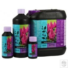 Blossom Builder Liquid