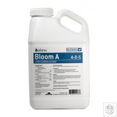 Blended Line - Bloom B
