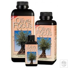 Olive Focus Growth Technology