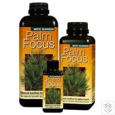 Palm Focus Growth Technology