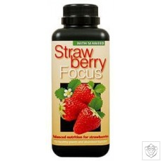 Strawberry Focus Growth Technology