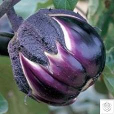 Aubergine 1 packet (400 seeds) N/A