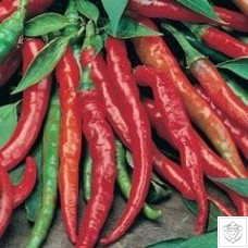 Chili Peppers 1 packet (50 seeds) N/A