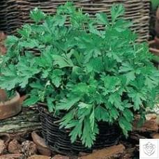 Herb 1 packet (6600 seeds) N/A